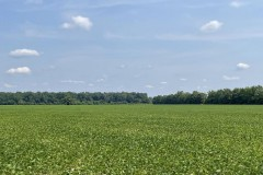 681 +/- Incredible Row Crop Farm, Excellent Duck Hunting, Great Farm Income, Poinsett County, AR