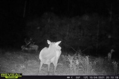 Tioga Counties 600+/- Acre Elk Paradise