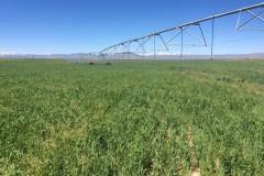 132 Acre, (120 Irrigated) Farm