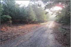 50 Acres in Itawamba County in Nettleton, MS