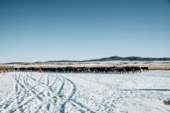 Elk Mountain Cattle Ranch