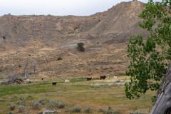 Kaycee Land & Livestock Ranch