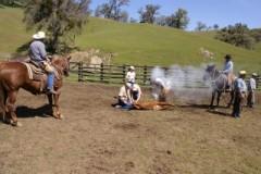 N3 Cattle Company