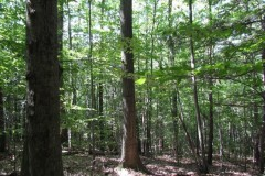 245 acres Log Cabin, Timberland, Waterfalls, and Pond in Harford NY Owego Hill Road