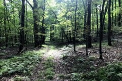 6 acres Building Lot in Kirkwood NY 130 Brown Road