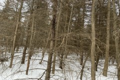 9 acres Wooded Hunting Land with Creek in Alfred NY 229 Hartsville Hill Road