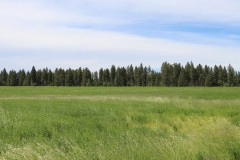 Winchester Cattle Ranch