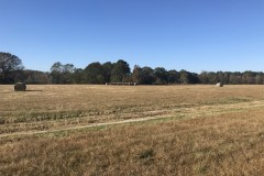 Rose Hill Cattle Ranch