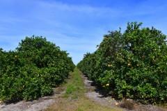 Florida Agricultural Portfolio