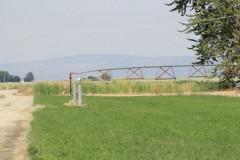 Columbia Basin Irrigation Project! 75.9 Acres, Franklin County, Washington
