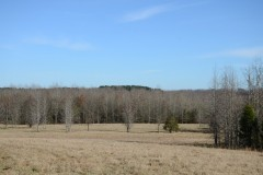 Recreational Hunting Land with Lake & Marketable Timber For Sale in Danville, AL