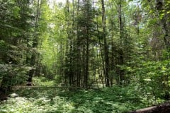 Big Game Hunting & Recreational Land For Sale in North MN
