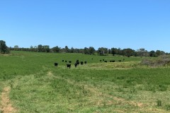 Productive Cattle Ranch For Sale in South Central MO