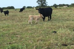 Horse & Cattle Ranch For Sale in Bryan County, OK