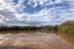 Turnkey Cattle Ranch & Home For Sale in Maricopa County, AZ