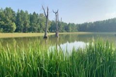 Hunting & Recreational Ranch For Sale in Pickens County, AL