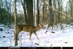 Farm & Hunting Land with Home For Sale in Clinton County, MI