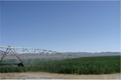 Lucio Hay Farms