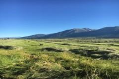 The Best of the Prestigious Carson Valley