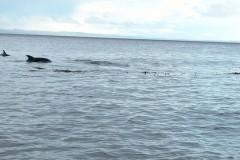 Cape Froward