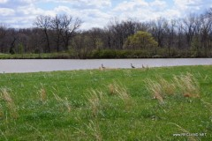 956 ac  Scenic Missouri Home & Farm - Can Divide - PRICE REDUCED
