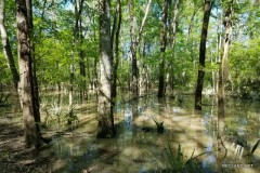 364 ac - Deer & Duck Hunting with Large Camp along Tensas River - PRICE REDUCED