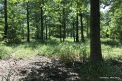 484 ac - Premium Deer Hunting Tract - Price Reduced