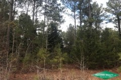 10.2 ac - Wooded Home Site Tract near Point - PRICE REDUCED