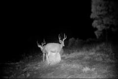 Muerto Creek Trophy Elk and Cattle Ranch