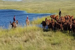Stewart Quarter Horse & Cattle Ranch