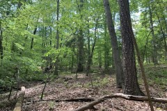 REDUCED!  3.7 Acres of Residential and Investment Land For Sale in Franklin County NC!