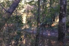Castor Creek Outdoorsman Paradise, Caldwell Parish, 1,250 Acres +/-