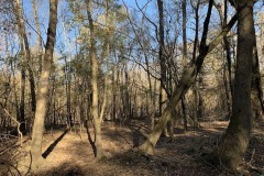 36.4 Acres of River Front Hunting and Timber Land For Sale in Craven County NC!
