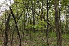 Little Bullskin - 225 acres - Gallia County