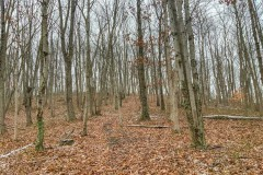 Meadow Run Rd - 205 acres - Pike County