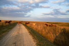 Wagstaff Ranch