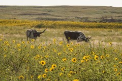 Boone Pickens' Mesa Vista Ranch: Over 100 Square Miles of Prime Eastern Texas Panhandle Ranch with Outstanding Improvements