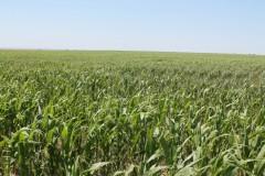 5,682.43 +/- Acres of Non-Irrigated Cropland in Western Nebraska