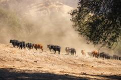 Elliott Land & Cattle