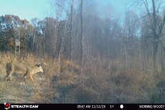 Recreational Hunting Land For Sale In Juneau County, WI,