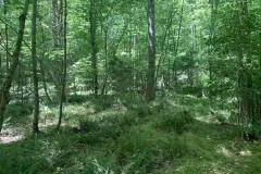 19.24 Acres of Timber and Hunting Land For Sale in Warren County, NC!