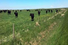 Northern Plains Grassland & Cattle Ranch