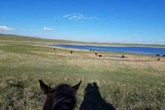 Stewart Quarter Horse & Cattle Ranch