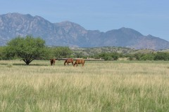 Crown C Ranch