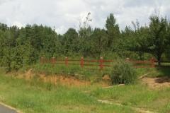 Darby Meadows